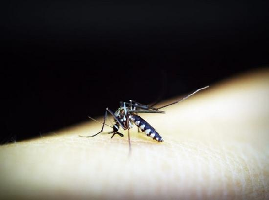 Dengue virus becomes resistant to certain vaccines