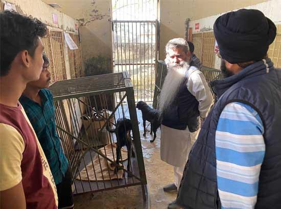 In next few months, Ludhiana will become completely free from stray dog menace: Bharat Bhushan Ashu