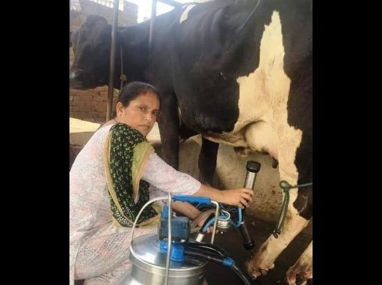 Kuldeep Kaur – a teacher-turned-dairy farmer's inspiring story