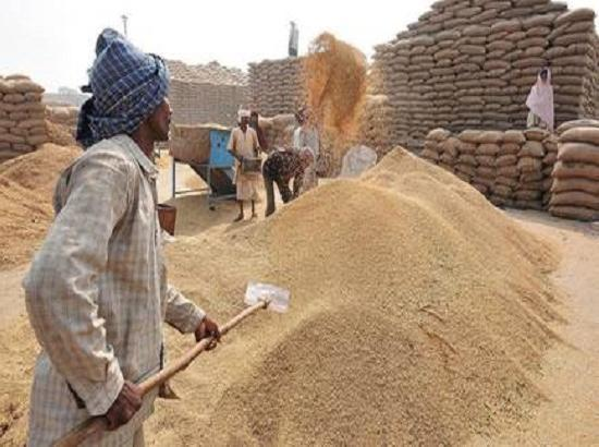 Mohali : 3937 metric tonnes paddy arrives , 3262 MT purchased in the district