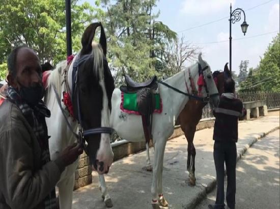 Shimla's horse owners facing hardships due to second wave of pandemic