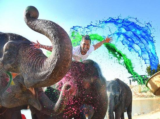 Junglee star Vidyut Jammwal celebrates Holi with Elephants