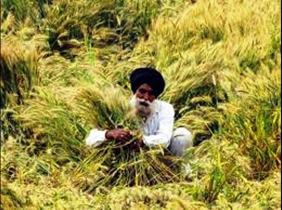 Is waiving off loans the solution to the problem of farmer suicides?