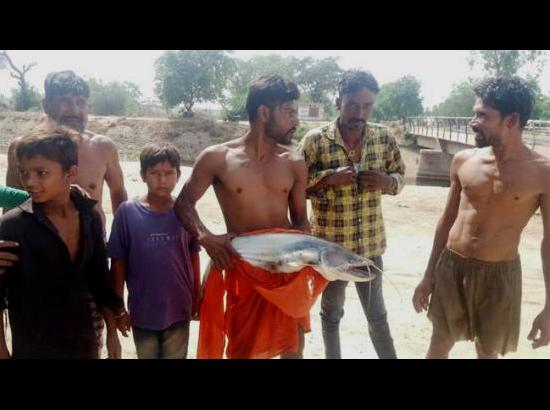 Fishes, snakes found dead in Rajasthan Feeder in Ferozepur