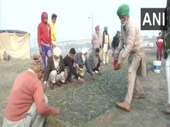 Protesting farmers use Nirankari Samagam ground in Burari to grow crops