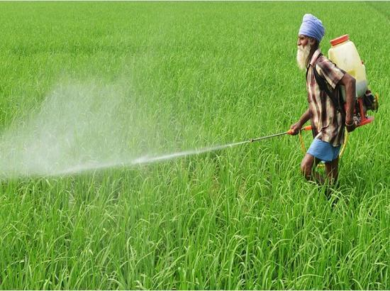 Only 7% Urea & 71% DAP left in stock in district Ludhiana : Chief Agriculture Officer